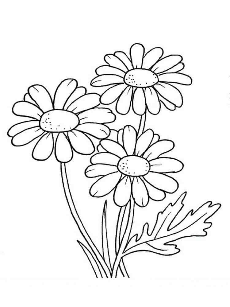 daisy coloring page 30 printable autumn or fall coloring pages