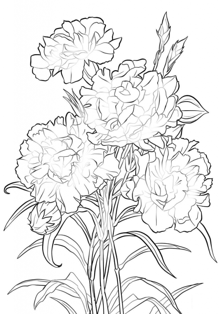 Scarlet Carnation flowers coloring pages