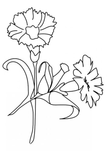 16 Carnation flowers coloring pages