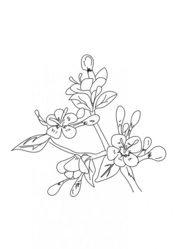 17 Cherry Blossom flowers coloring pages
