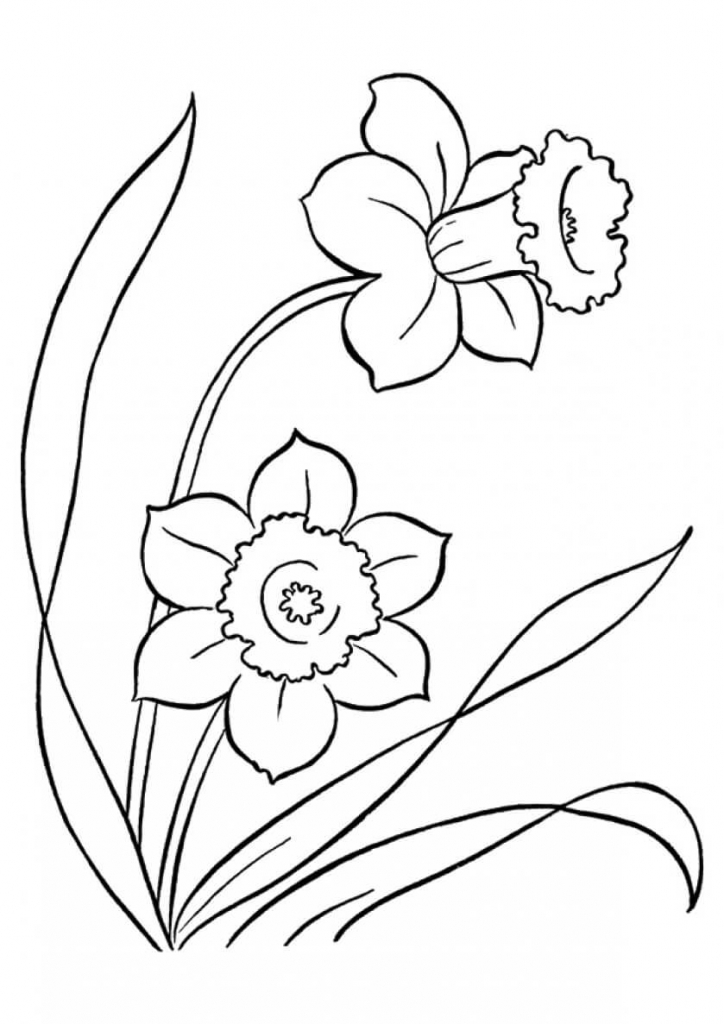 Daffodils flowers coloring pages