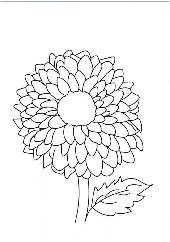 Dahlia flowers coloring pages