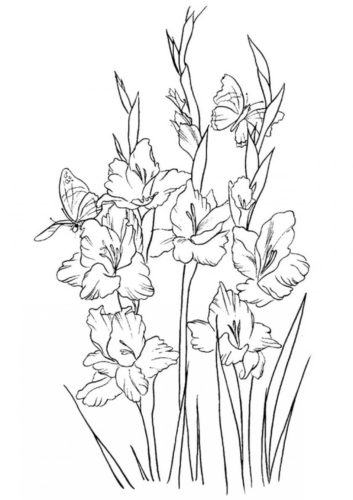 26 Gladiolus flowers coloring pages