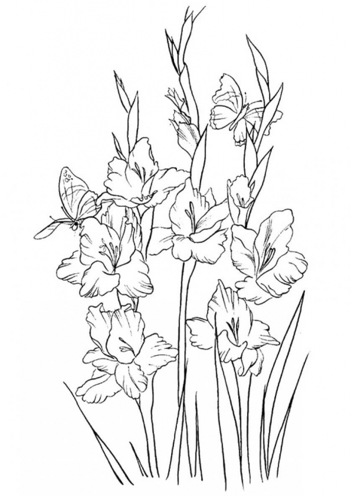 Gladiolus flowers coloring pages