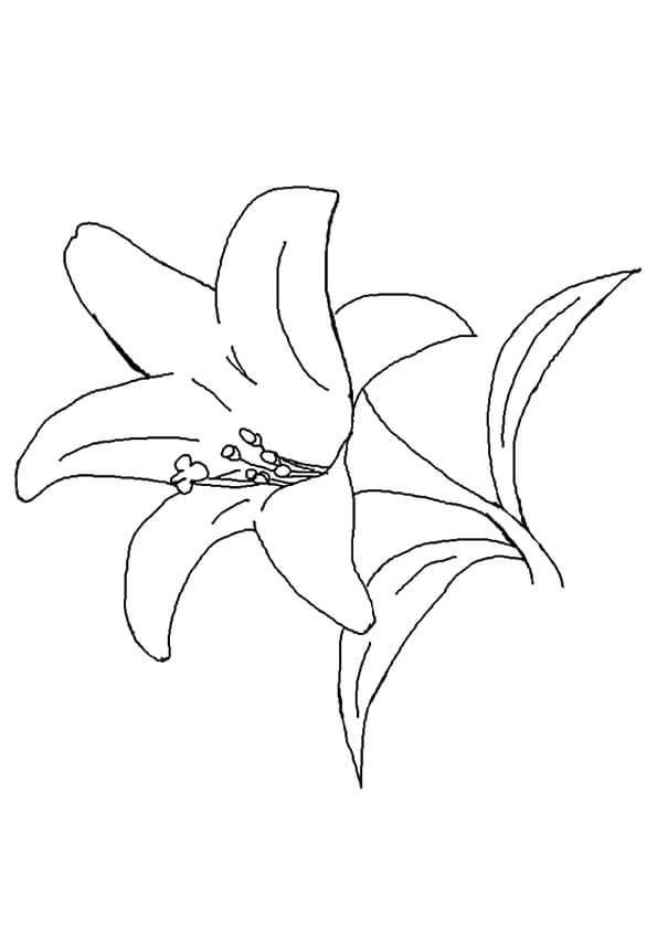 Beautiful printable flowers coloring pages for Lily flower coloring pages