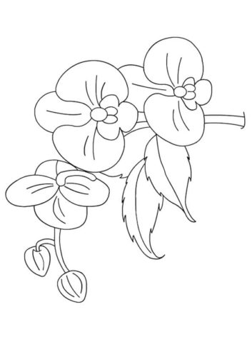 32 Orchids flowers coloring pages