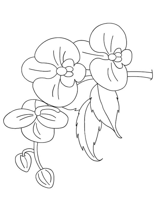 Orchids flowers coloring pages