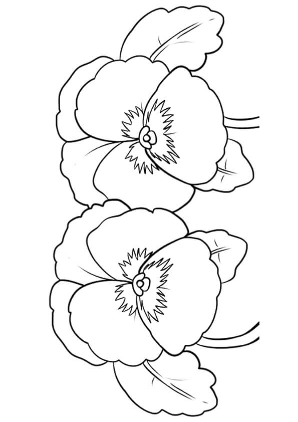 Pansy flowers coloring pages