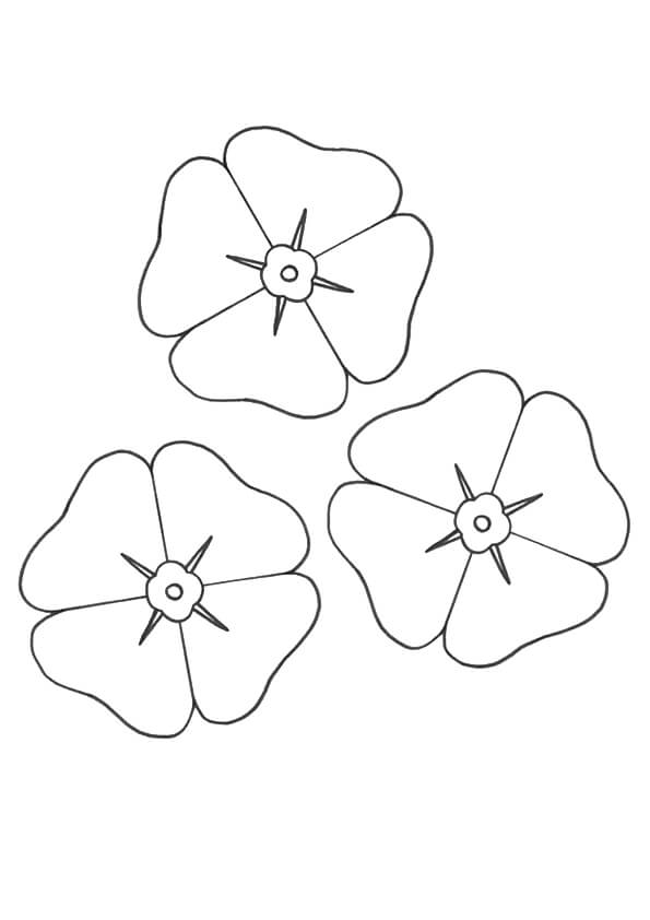 Poppy flowers coloring pages