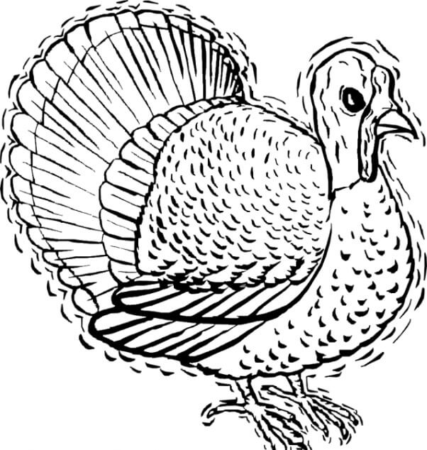 35 Mister Turkey Thanksgiving coloring page