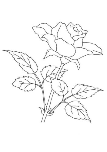 35 Rose flowers coloring pages
