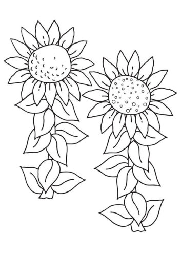 36 Sunflower flowers coloring pages