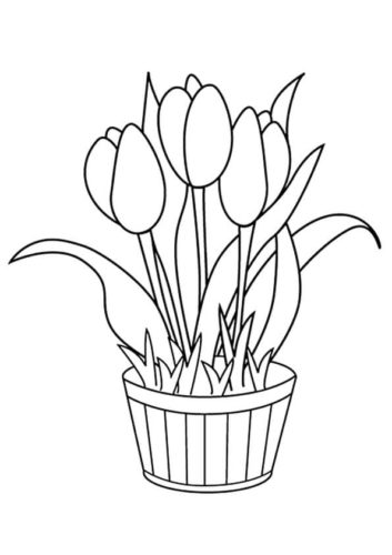 37 Tulip flowers coloring pages