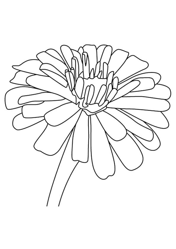 Zinnia flowers coloring pages