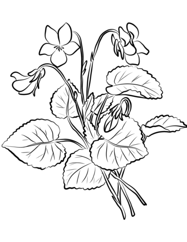 39 Violet flowers coloring pages