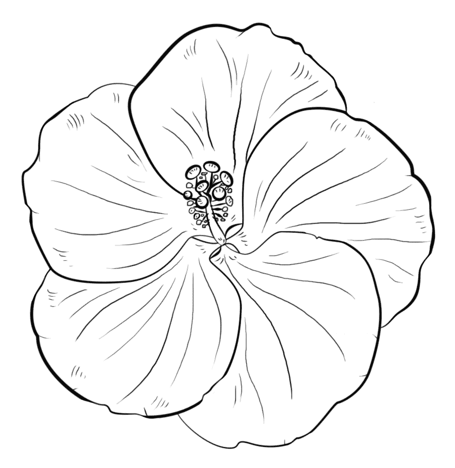 Hibiscus flowers coloring pages