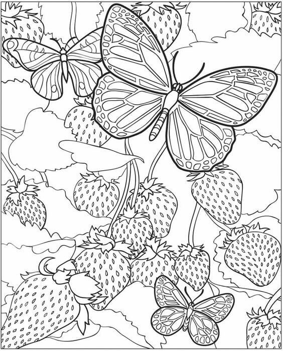 Butterflies In Strawberry Field Coloring Page