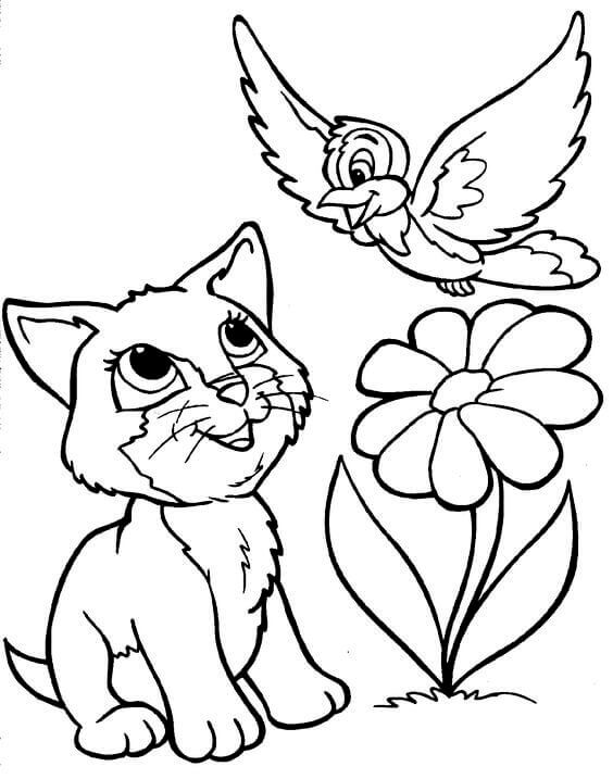 Cat And Bird Coloring Images