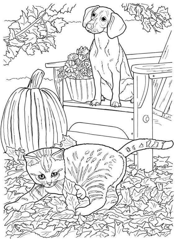 Cat And Dog Coloring Page