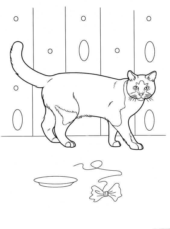 Curious Cat Coloring Pages