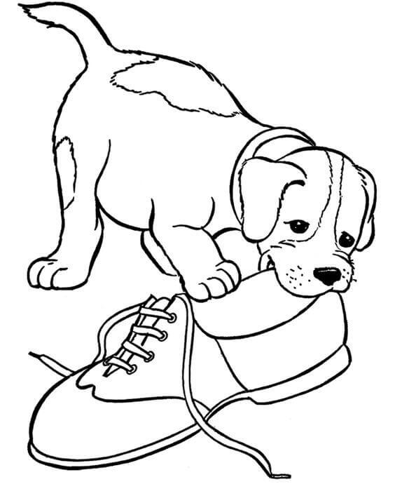 Dog Chewing Shoe Coloring Page