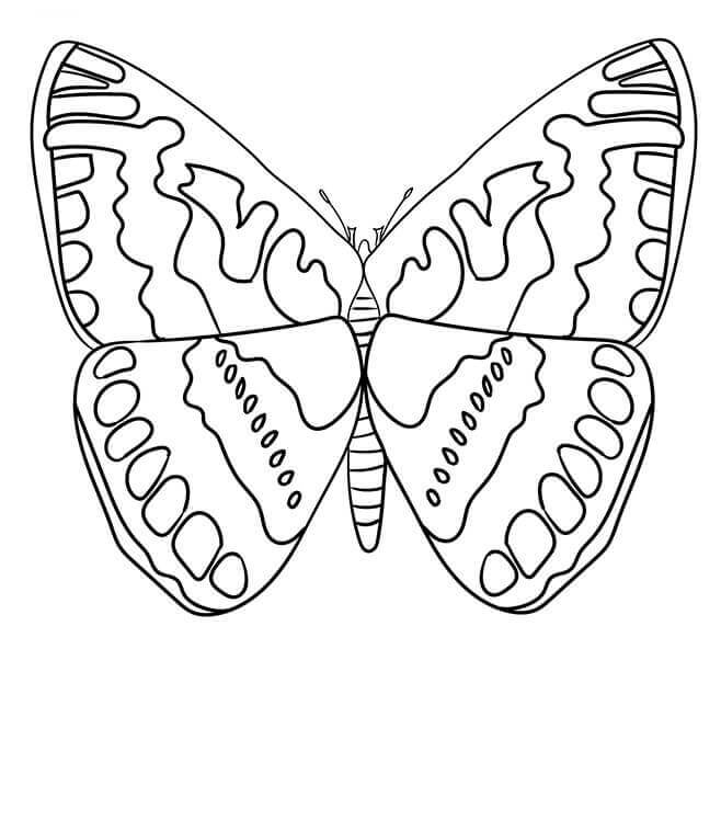 Hesperiidae Butterfly Coloring Page