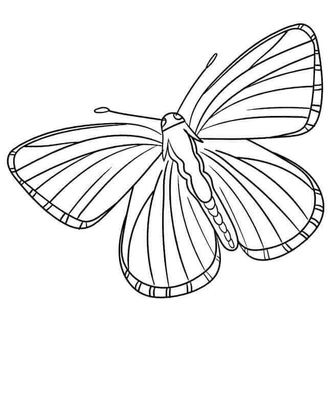 Lycaenidae Butterflies Coloring Page