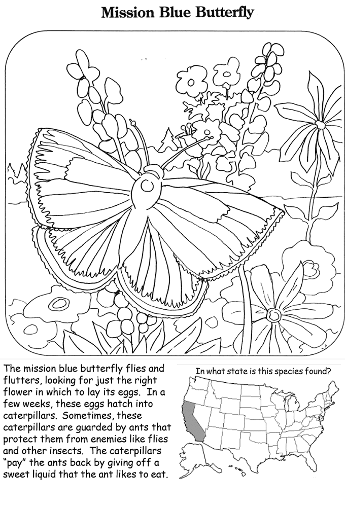 Mission Blue Butterfly Coloring Page