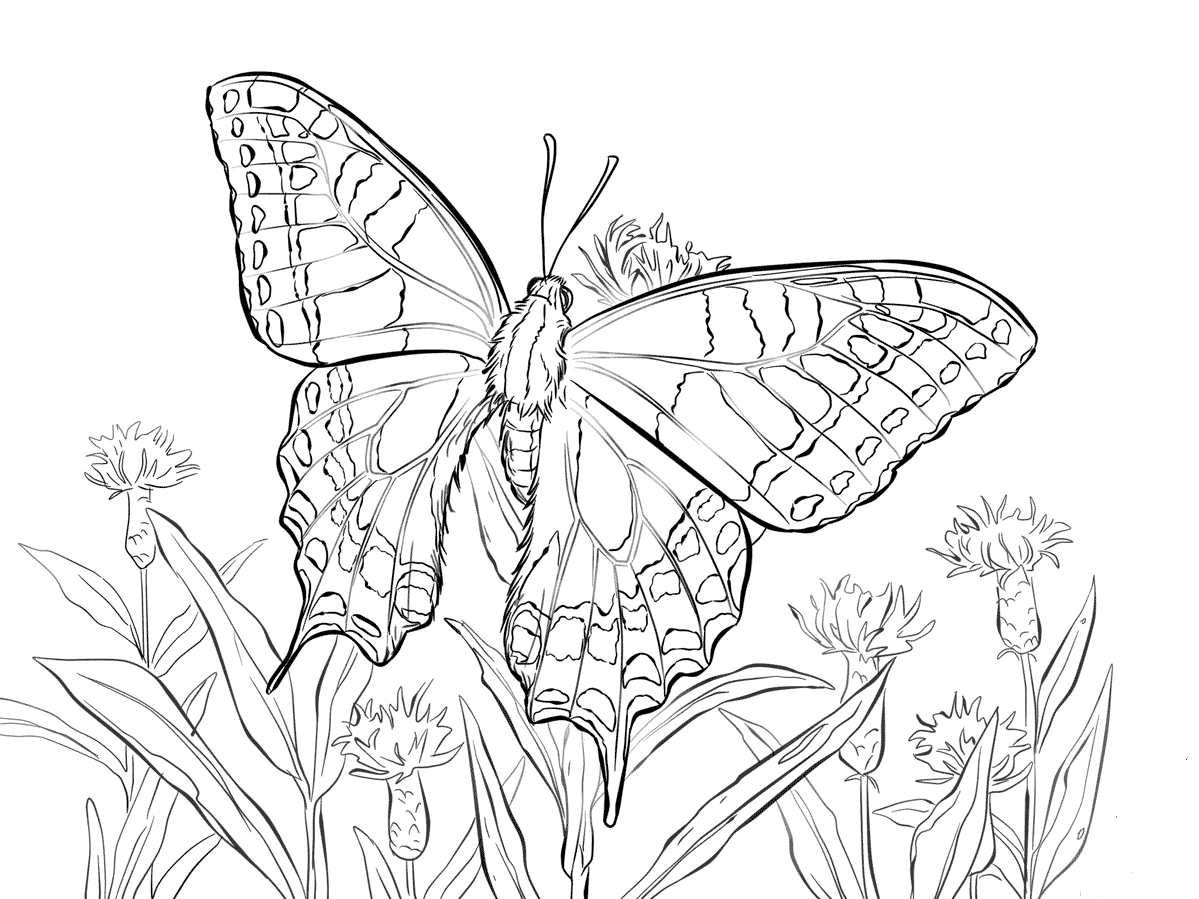 Old World Swallowtail Coloring Page
