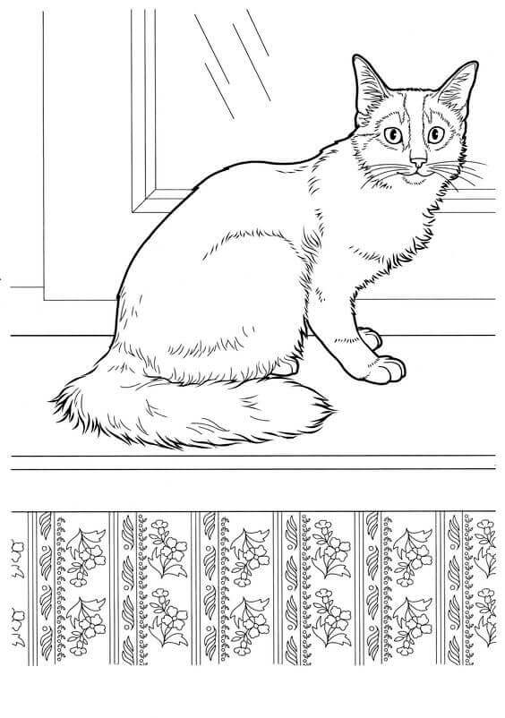 Realistic Cat Coloring Sheets