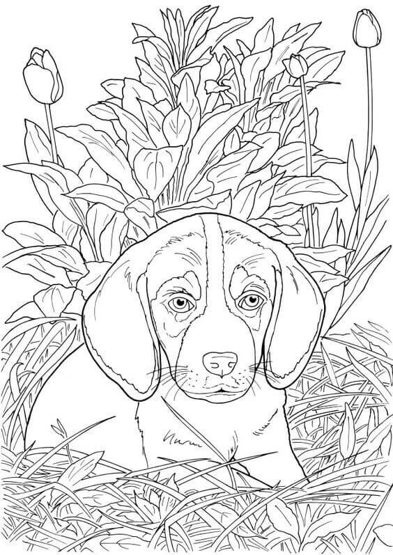 Realistic Dog Coloring Page