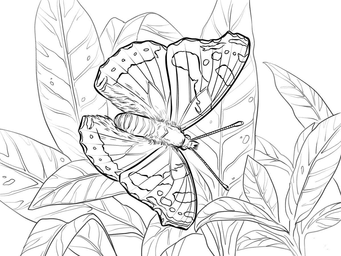 Red Admiral Butterfly Coloring Page