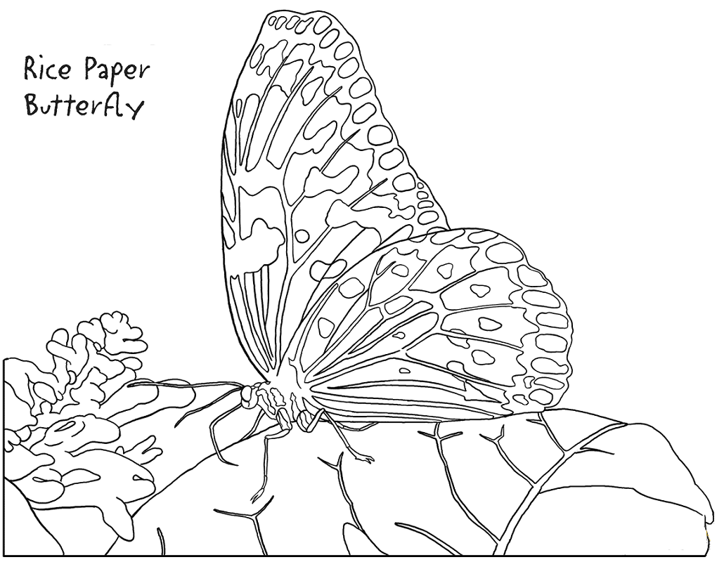 Rice Paper Butterfly Coloring Page