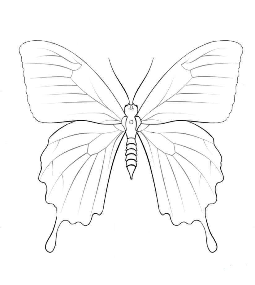 Ulysses butterfly Coloring Page