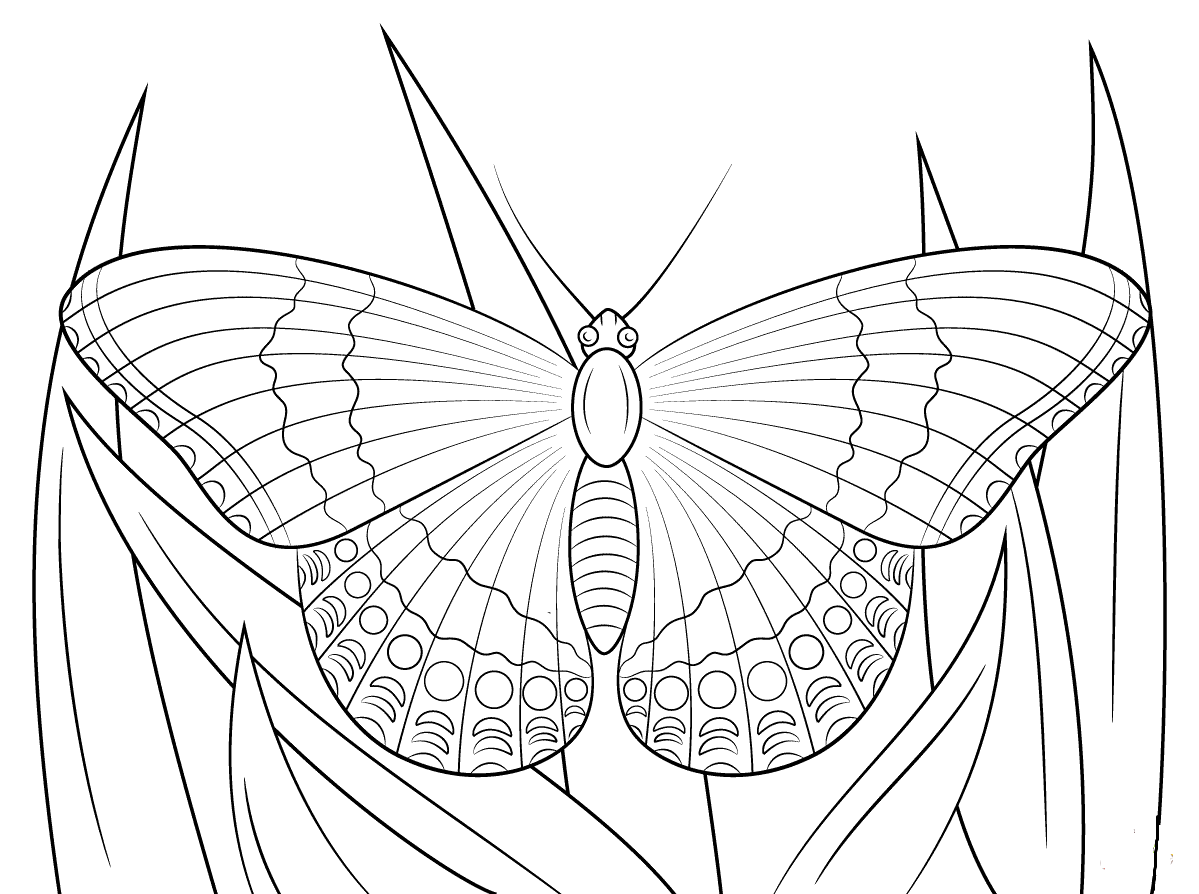White Admiral Butterfly Coloring Page