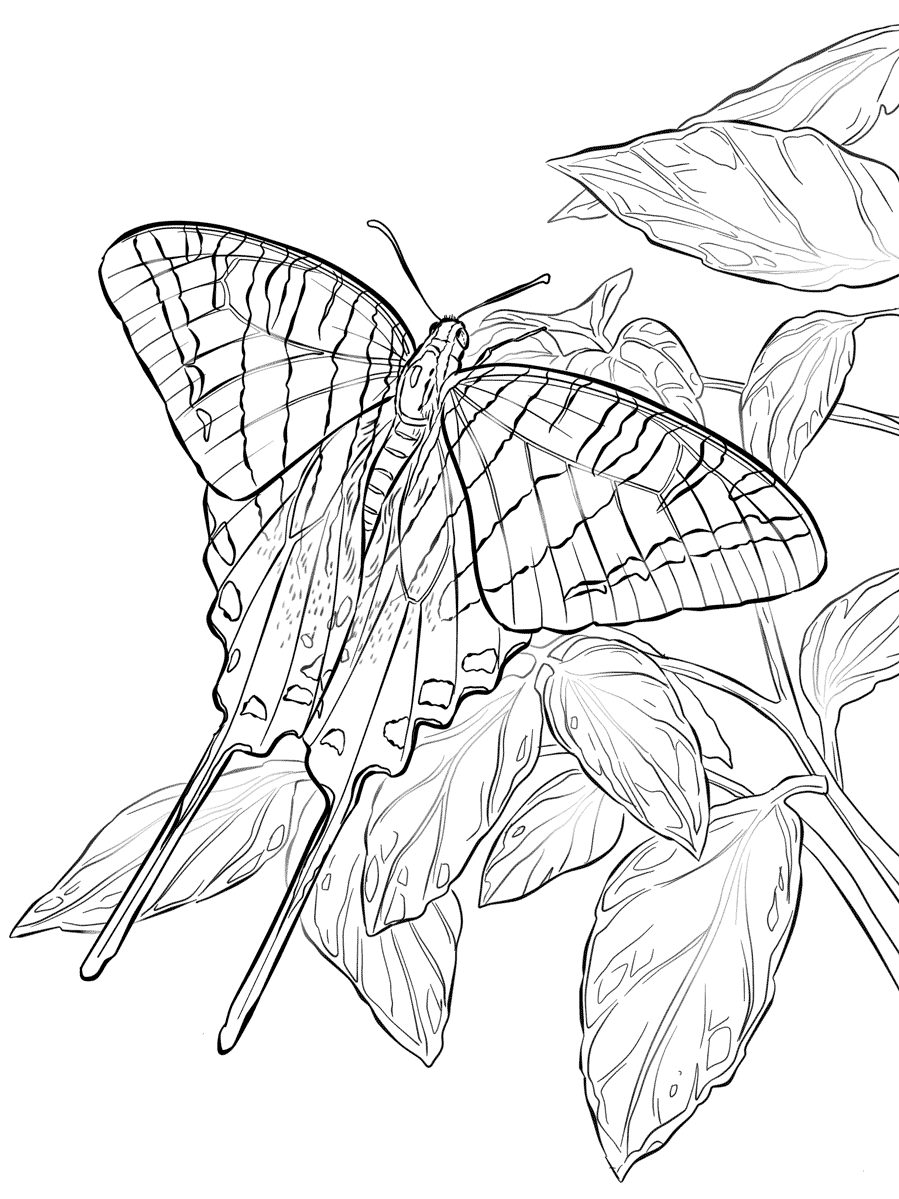 Zebra Swallowtail Butterfly Coloring Page