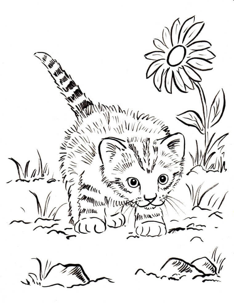 kitten printout coloring pages - photo#11