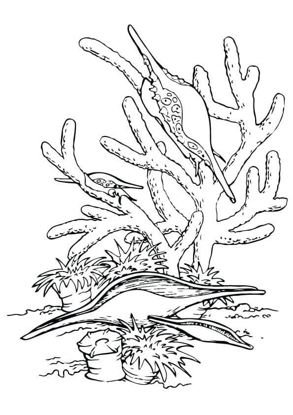 Under The Sea Coloring Images
