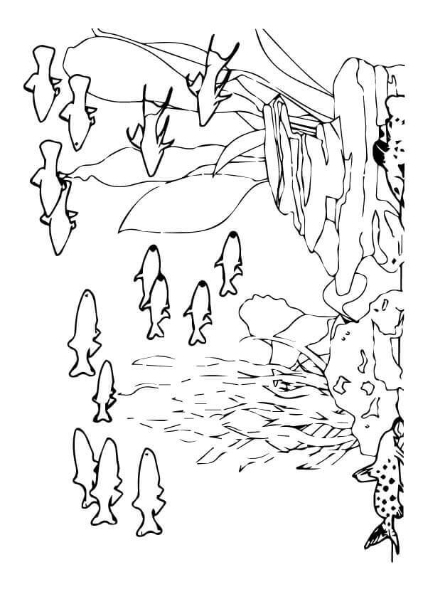 Sea Animals Coloring Pages