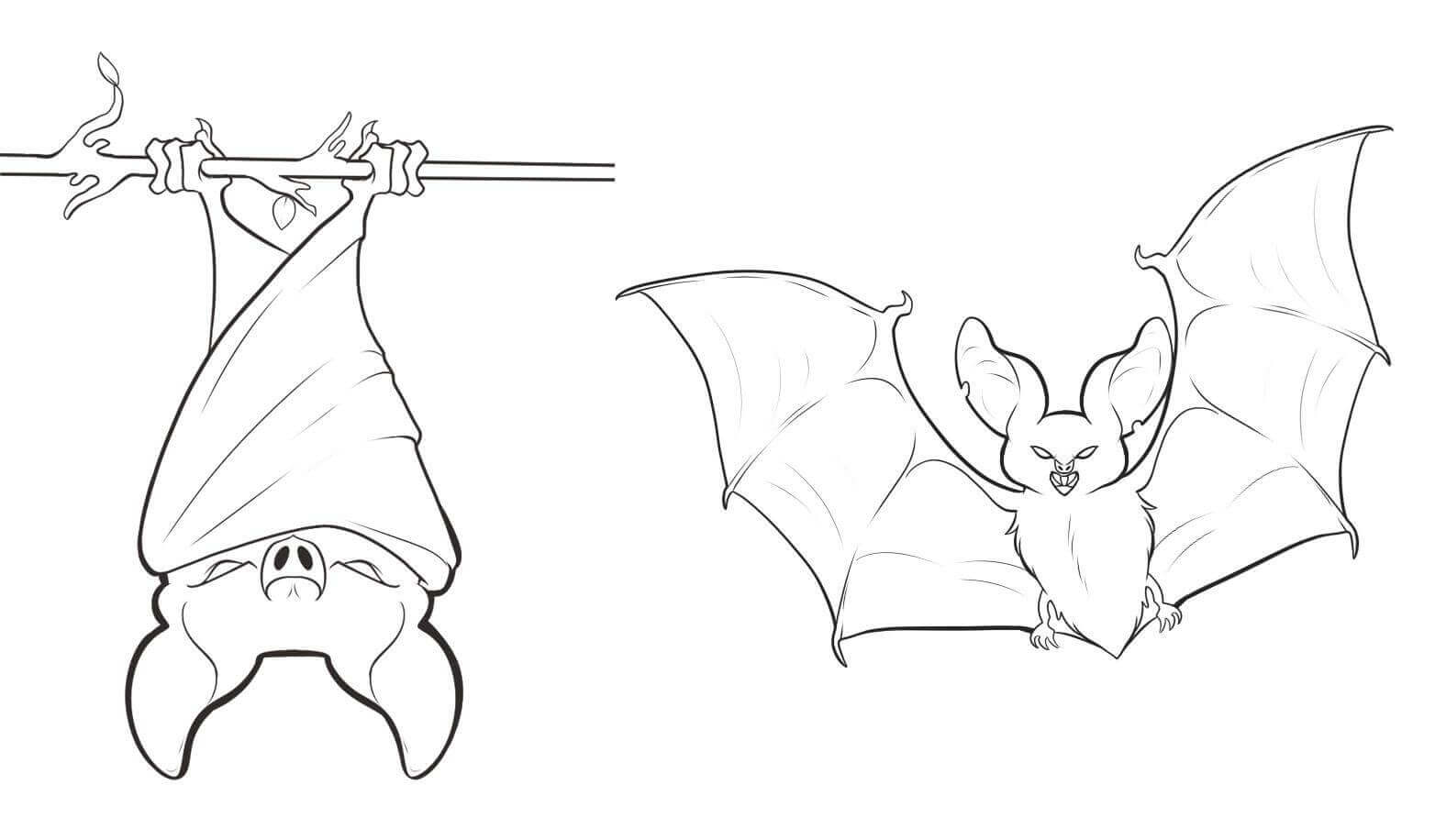 Bat Hanging Upside Down Coloring Page