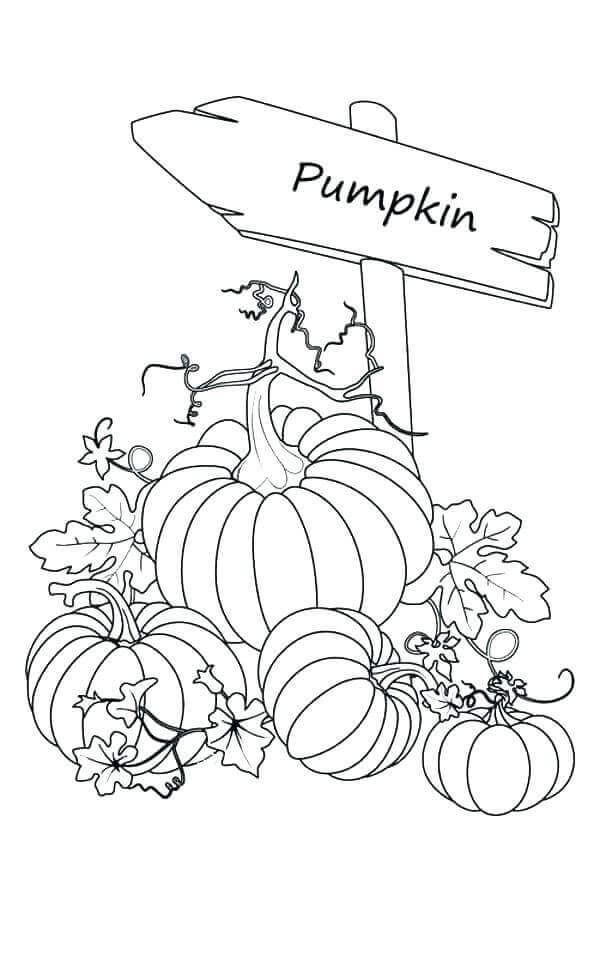 Free Printable Pumpkin Coloring Sheets
