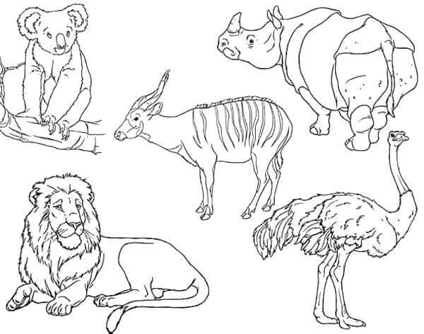 - Free Printable Zoo Coloring Pages For Kids