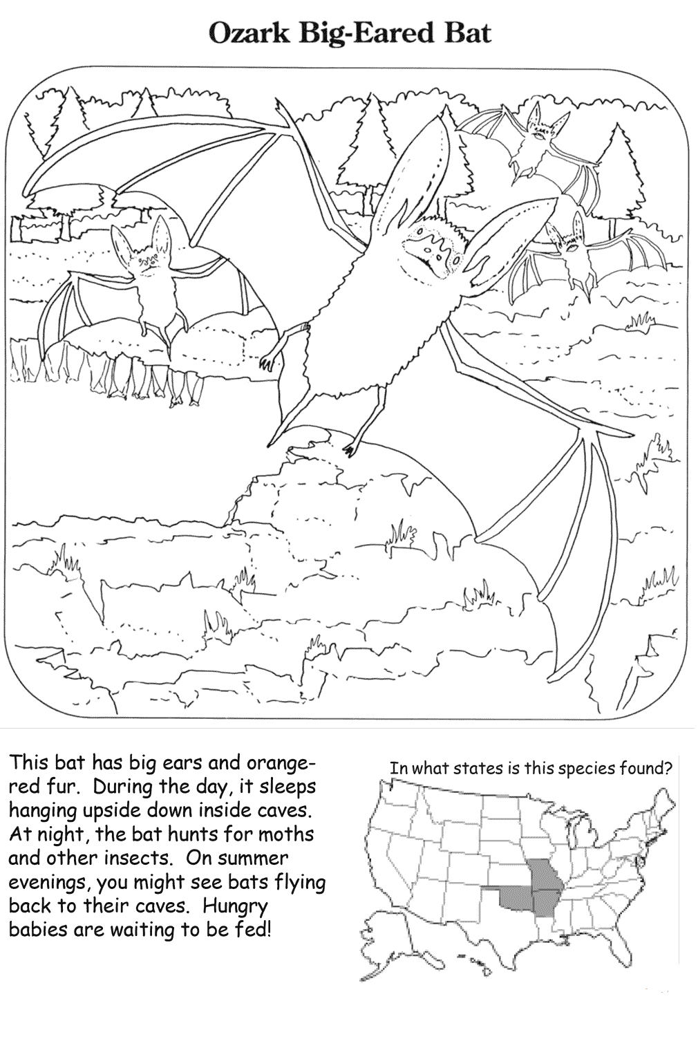 Ozark Big Eared Bat Coloring Page
