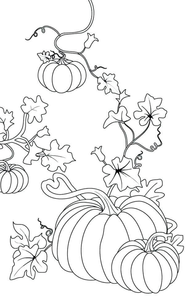 Pumpkin Plant Coloring Page