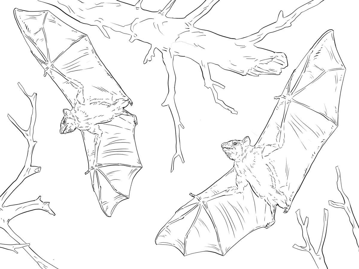 Realistic Bats Coloring Pages