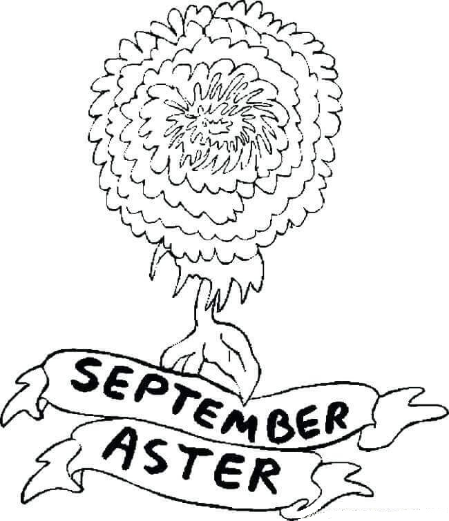 September Flower Coloring Page