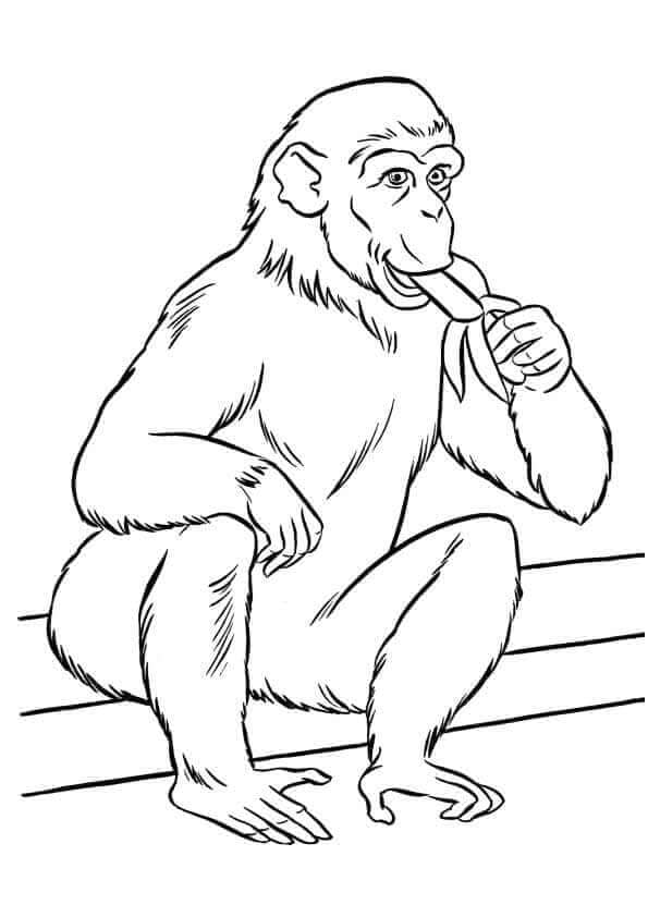 Zoo Money Coloring Page