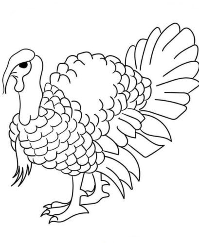 Domestic Turkey Coloring Picture To Print
