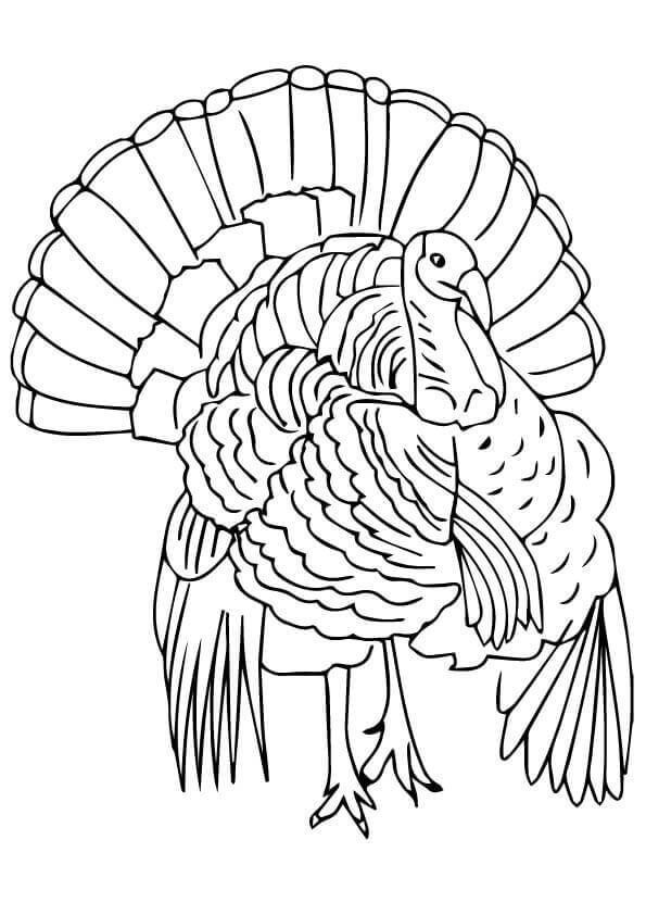 Florida Wild Turkey Coloring Page