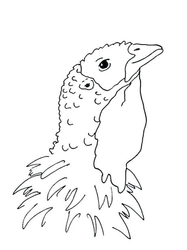 Realistic Turkey Animal Coloring Pages